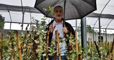El 2021 con la mejor Mystica, todas las semanas el Doctor Álvaro Ruiz Moreno nos cuenta los secretos del Jardinero. HOY: JAZMÍN DE LLUVIA